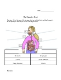 The Digestive Tract Assessment