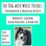NGSS MS-LS3-1 Genetic Mutations - The Dog with White Patches Phenomenon