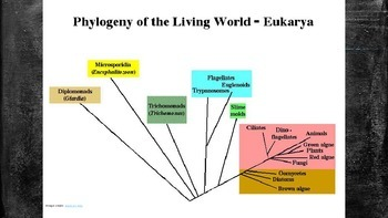 The Domains and Kingdoms of Life