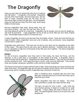 The Dragonfly Reading Comprehension