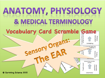 The Ear: Anatomy & Medical Terminology Vocabulary Scramble Puzzle