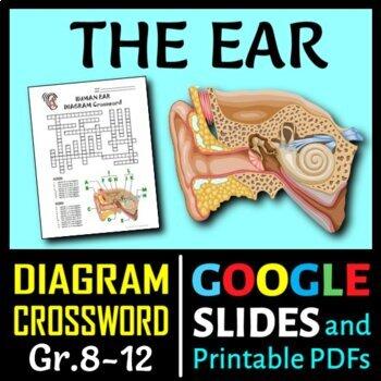 Ear Crossword with Diagram {Editable}