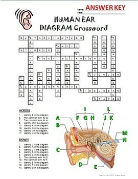 Ear Crossword with Diagram {Editable}