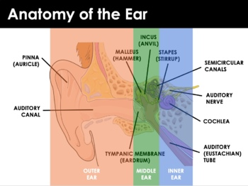 Body Senses - The Ear and Hearing