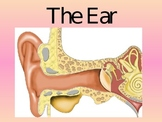 The Ear and How We Hear Sound- Powerpoint presentation