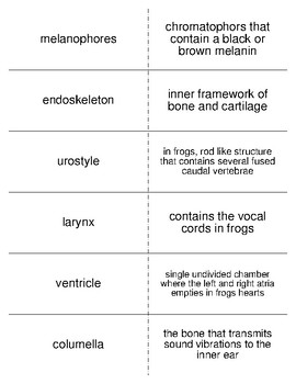 The Early Tetrapods and Modern Amphibians Vocabulary Flash Cards for Zoology