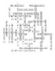 The Echinoderms Vocabulary Crossword for Zoology