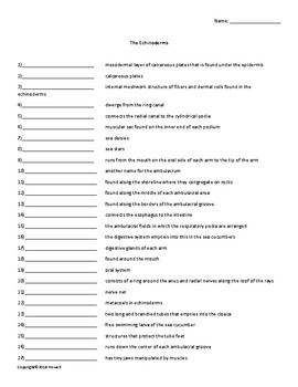 The Echinoderms Vocabulary Quiz or Worksheet for Zoology