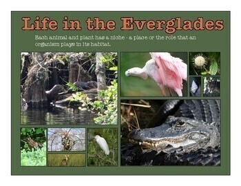 The Ecology of the Everglades
