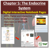 The Endocrine System - Digital Interactive Notebook Pages