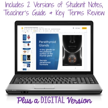 Endocrine System PowerPoint and Notes