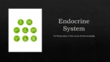 Human Anatomy & Physiology The Endocrine System Presentation