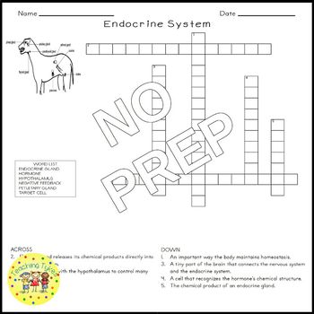 Endocrine System Crossword Puzzle