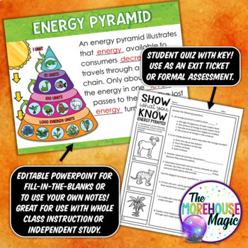 The Energy Pyramid Doodle Notes | Science Doodle Notes
