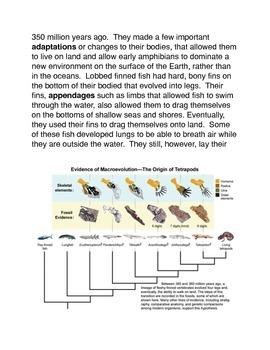 The Evolution of Amphibians Common Core Activity