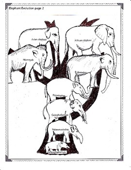 The Evolution of the Elephant