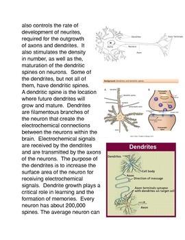 The Evolution of the Hominid Brain: The SRGAP2 Gene