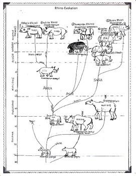 The Evolution of the Rhinoceros