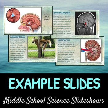 The Excretory System: A Life Sciences Slideshow!