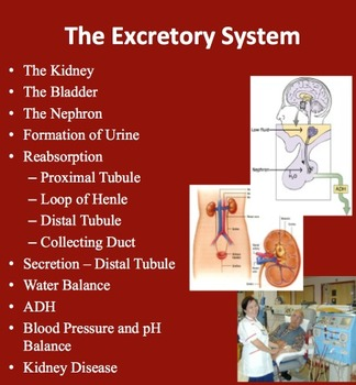 The Excretory System - Maintaining Water Balance - Senior Biology Lesson Package