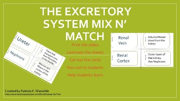 The Excretory System - Mix N' Match Cards