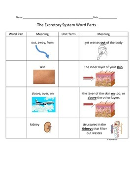 The Excretory System Root Word Parts