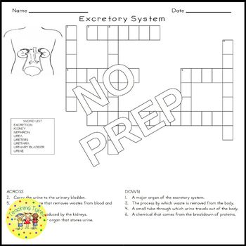 The Excretory System Science Crossword Puzzle Coloring Worksheet Middle School