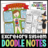 The Excretory System Science Doodle Notes with PowerPoint & Quiz