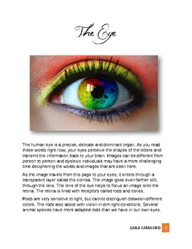 Physiology: The Eye