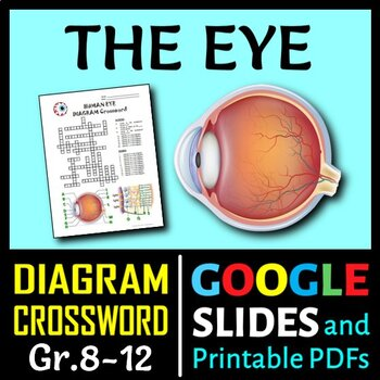 Eye Crossword with Diagram {Editable}
