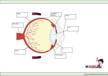The Eye worksheet