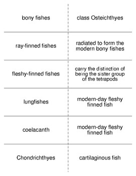 The Fishes Vocabulary Flash Cards for Zoology