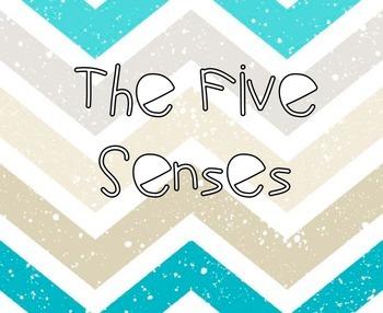 The Five Senses Experiment!