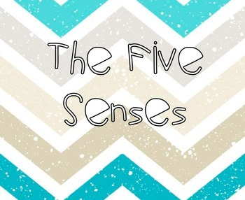 The Five Senses Experiment!
