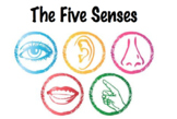 The Five Senses Lesson Plan & Stations Packet