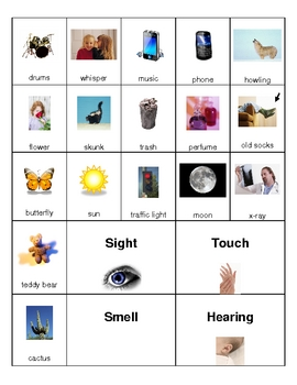 The Five Senses Picture Sort