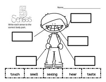 The Five Senses Science Activity