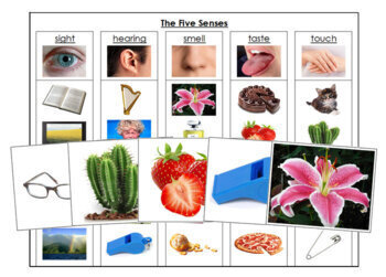 The Five Senses: Sorting Cards & Chart