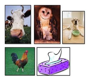 The Flea's Sneeze ESL center SEQUENCING science animals cut paste