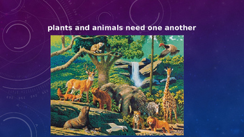 The Food Chain and how plants and animals need each other