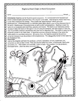 Food Chain Example (Daphnia)
