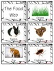 The Food Web