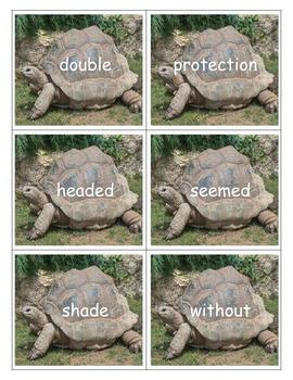 The Foolish Tortoise - Eric Carle/Richard Buckley - Book Study Center Activities