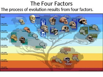 The Four Factors Presentation