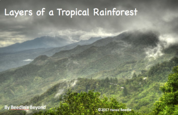 The Four Layers of the Tropical Rainforest
