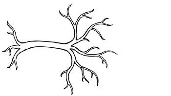 The Four Seasons Tree
