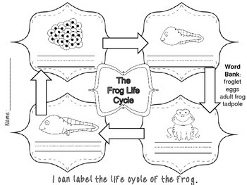 The Frog Life Cycle