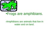 The Frog's Life PowerPoint
