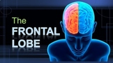 The Frontal Lobe - Brain Games (Powerpoint & 3 Games)