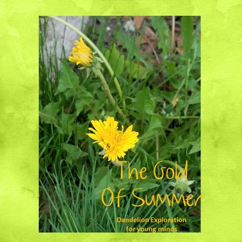 The Gold of Summer - Dandelion Exploration for Young Minds